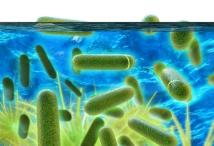 Legionellen im Trinkwasser